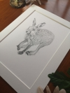 original hare sketch, study 5