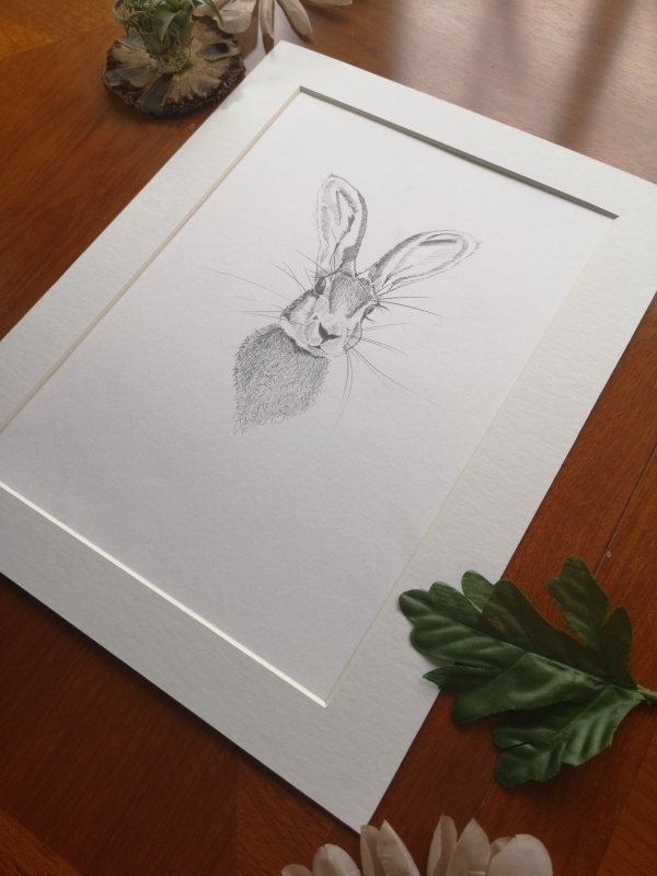 original hare sketch, study 2