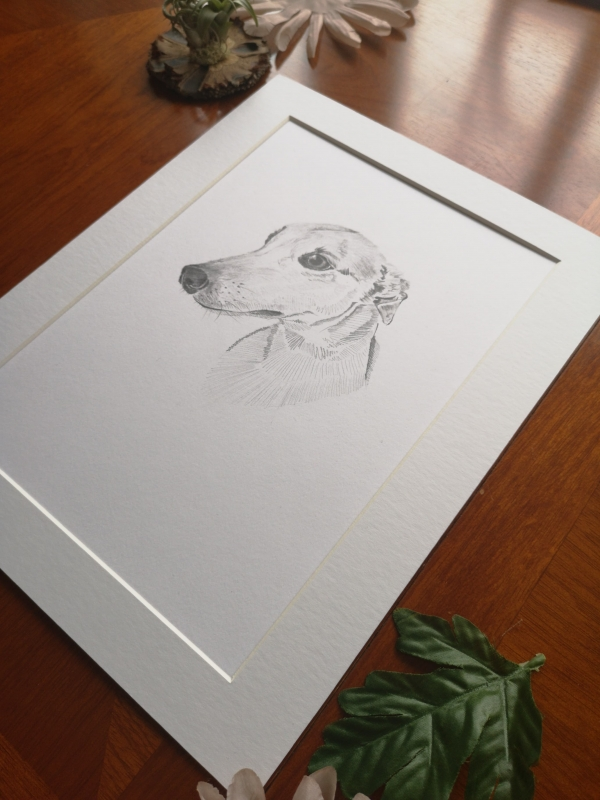 original greyhound sketch