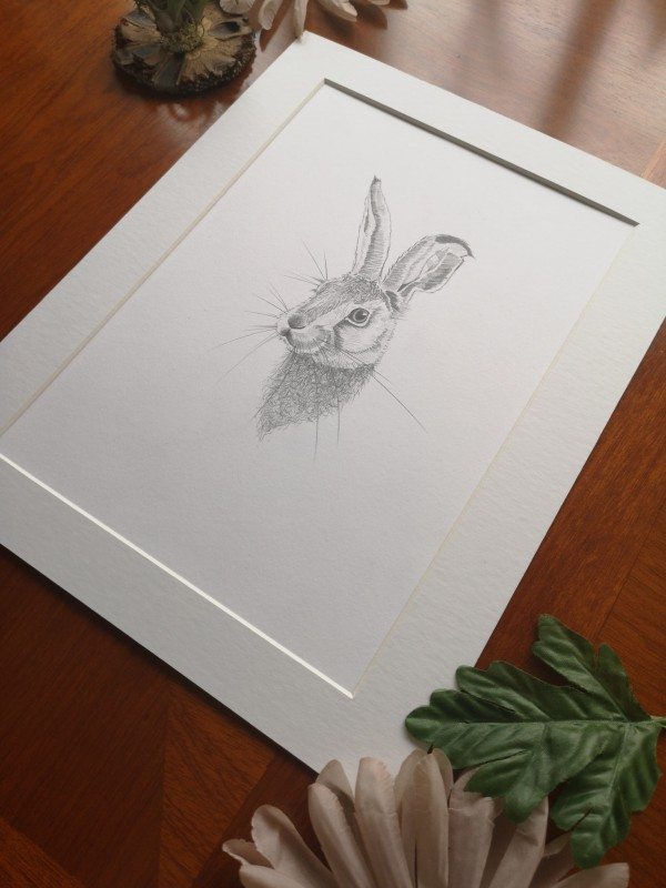 original hare sketch, study 1