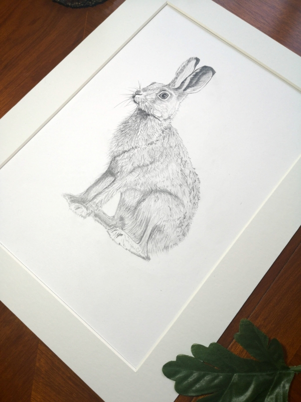 original hare sketch, study 4