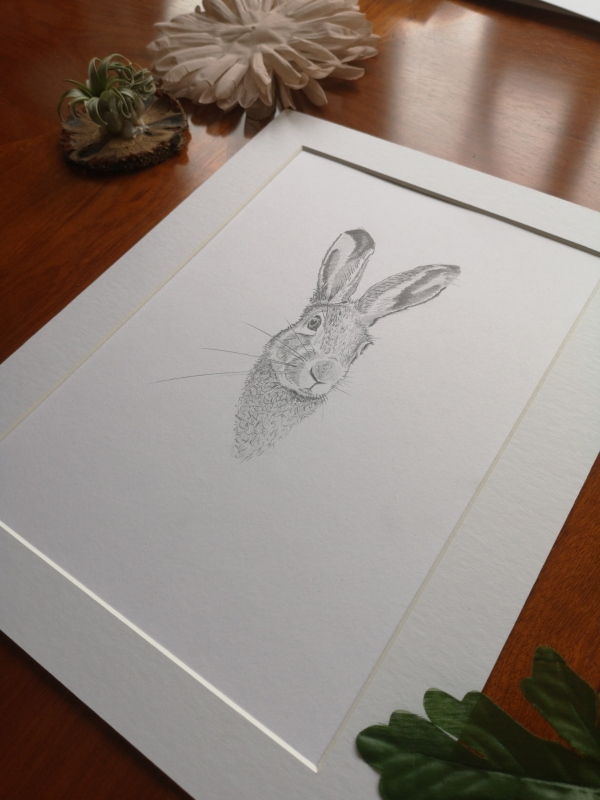original hare sketch, study 3